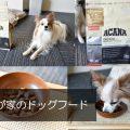 アカナを食べてるクレっちちゃんのドッグフードインタビュー