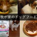 シュプレモを食べてるカミーユちゃんのドッグフードインタビュー
