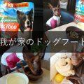 K9ナチュラルを食べてるミニチュアピンシャーのうずらちゃんドッグフード